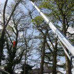 Self drive cherry picker hire for tree surgery work